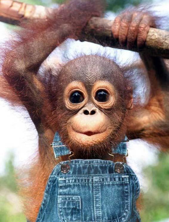 Komik hayvanlar komik hayvan resmi komik hayvan resimleri komik hayvan